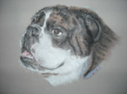 Custom Pet Portrait Pastels Acrylic Prints - PET PORTRAIT ARTIST   English Bulldog Acrylic Print by Nancy Custin