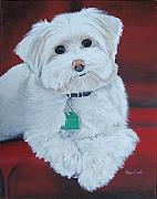 Maltese Dog Posters - Pet Portrait Painting Commission Maltese Dog  Poster by Sharon  Lamb
