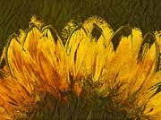 Textured Floral Framed Prints - Petales de Soleil - a43t02b Framed Print by Variance Collections
