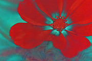 Red Flower Photos - Petaline - t23b2 by Variance Collections
