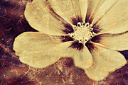 Texture Flower Metal Prints - Petaline - t37d03a3 Metal Print by Variance Collections