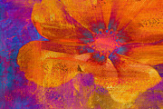 Orange Flower Acrylic Prints - Petaline - t39a04b Acrylic Print by Variance Collections