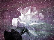 Rain Digital Art Metal Prints - Petals and Drops Metal Print by Julie Palencia