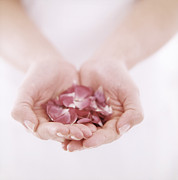 Petals Lifestyle Photos - Petals Held In Hands by Cristina Pedrazzini