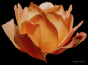 Petals Of Orange Sorbet Print by DigiArt Diaries by Vicky B Fuller