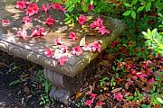 Stone Bench Framed Prints - Petals on a bench Framed Print by Susanne Van Hulst