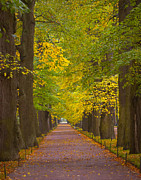 Colorful Trees Metal Prints - PETERHOF. St. Petersburgh Russia Metal Print by Juli Scalzi