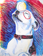 Iowa Drawings - Petey  by Jon Baldwin  Art