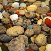 Pebbles Posters - Petoskey Stones with Shells ll Poster by Michelle Calkins