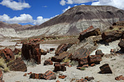 Petrified Forest Prints - Petrified Forest 2 Print by Bob Christopher