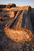 Petrified Forest Prints - Petrified Forest Print by Bryan Allen
