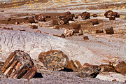 Petrified Forest Framed Prints - Petrified Forest National Park Framed Print by James Bo Insogna