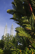 Towering Tree Prints - Petronas Towers Print by Jeremy Woodhouse
