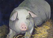 Pig Originals - Petunia by Ally Benbrook