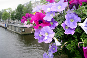 Petunia Posters - Petunia Flowers Over A Canal Poster by Chris Martin-bahr