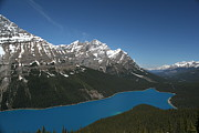 Turquoise Mountain Lake Prints - Peyto Lake Print by Bill Hansen