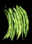 Green Bean Framed Prints - Phaseolus Coccineus Framed Print by Horticultural Art - Fred Michel