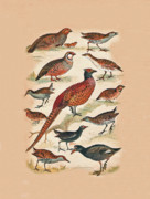 Eftalou Art - Pheasant and More by Eric Kempson