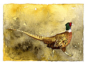 Pheasant Paintings - Pheasant by Eunice Olson