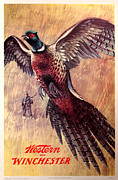 Pheasant Paintings - Pheasant Hunter by Unknown