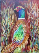 Belinda Lawson Metal Prints - Pheasant in Sage Metal Print by Belinda Lawson