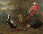 Monkey Paintings - Pheasant Macaw Monkey Parrots and Tortoise  by Charles Collins