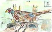 Pheasant Paintings - Pheasant by Matt Gaudian