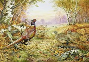 Fall Grass Posters - Pheasants in Woodland Poster by Carl Donner