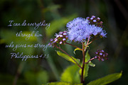 Strength Photo Posters - Philippians Verse Poster by Lena Auxier