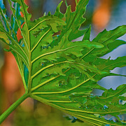 Philodendron Print by Herb Paynter