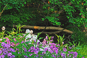 Phlox Prints - Phlox Along The Creek 7185 Print by Michael Peychich