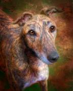 Brindle Digital Art Prints - Phoebe 1 Print by Nikki Miller