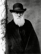 Darwin Framed Prints - Photograph Of Charles Darwin In 1881, Aged 72 Framed Print by