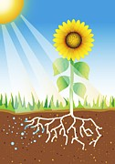 Energy Conversion Posters - Photosynthesis, Artwork Poster by David Nicholls