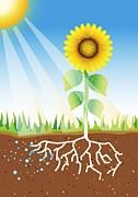 Photosynthesis, Artwork Print by David Nicholls