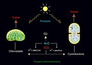 Energy Conversion Posters - Photosynthesis, Artwork Poster by Francis Leroy, Biocosmos