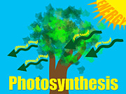 Beckley Wv Photographer Posters - Photosynthesis Poster by Lj Lambert
