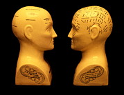 Traits Prints - Phrenology Busts Print by Mark Sykes