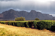 Robert Schambach - Picacho Peak Hedge