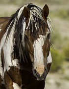 Mustangs Metal Prints - Picasso Comes Close Metal Print by Carol Walker