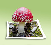 Toadstool Photo Posters - Pick Me Poster by Bronze Riser