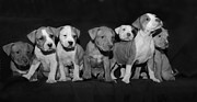 Puppies Photo Originals - Pick Me  by Lee  Michel