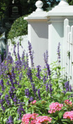 Country Chic Prints - Picket fence and purple flowers Print by adSpice Studios