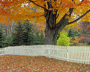 Picket Fence Prints - Picket Fence Print by Garry McMichael
