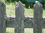 Picket Fence Prints - Picket Fence Print by Mg Rhoades