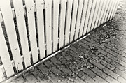 Picket Fences Posters - Picket Fence Poster by Patrick M Lynch