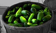 Pickling Cucumbers Print by Ms Judi