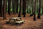 Autumn Scene Prints - Picnic Table Print by Carlos Caetano