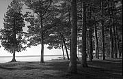Picnic Table View-newport State Park Print by Stephen Mack