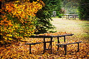 Canada Photos - Picnic table with autumn leaves by Elena Elisseeva
